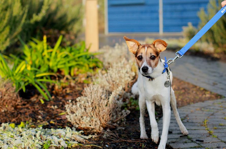 Giving My Dog Up For Adoption Uk