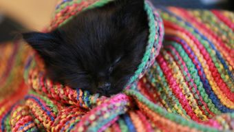 Marbles the kitten getting cosy at Battersea.