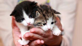 Elouise's kittens